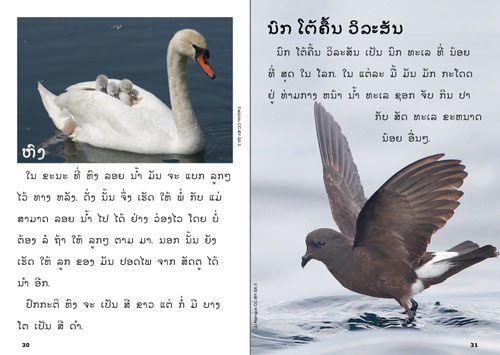 Samples pages from our book: The Green Book about Birds