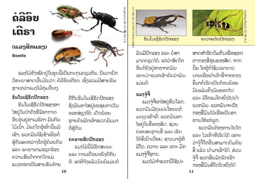 Samples pages from our book: Insects are Fascinating